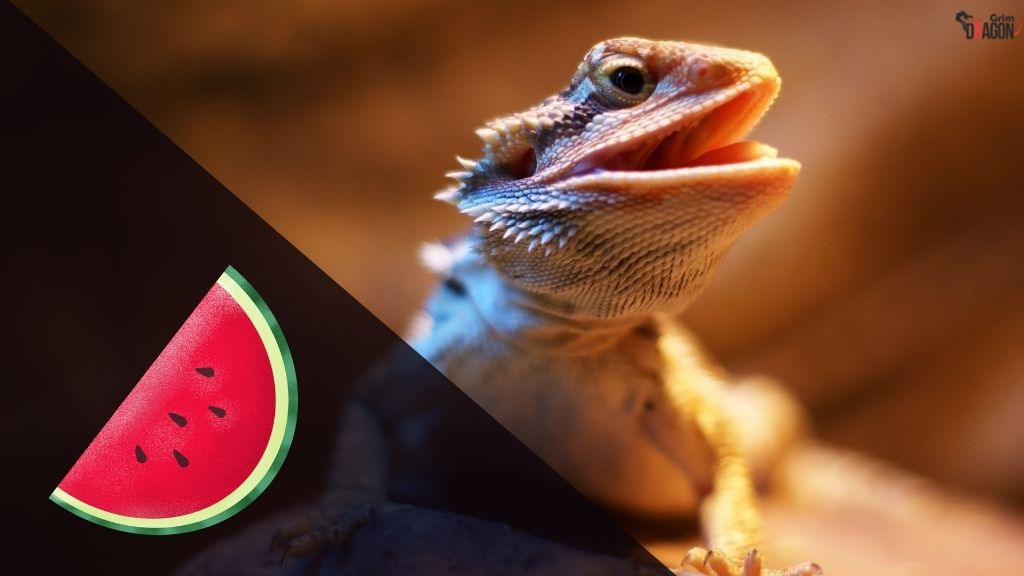 Can Bearded Dragons Eat Watermelons?